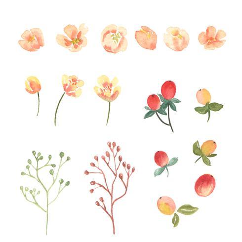 Floral e deixa o conjunto de elementos em aquarela vetor