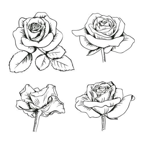 Conjunto coleção de rosas enfraquecidos com folhas isoladas no fundo branco. Ilustração vetorial vetor