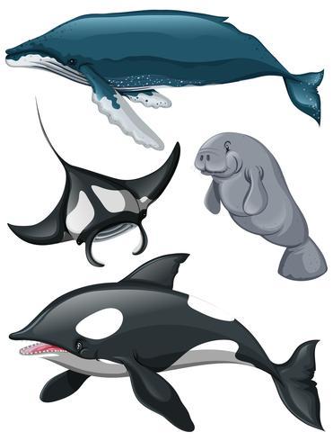 Tipo diferente de baleias e peixes vetor