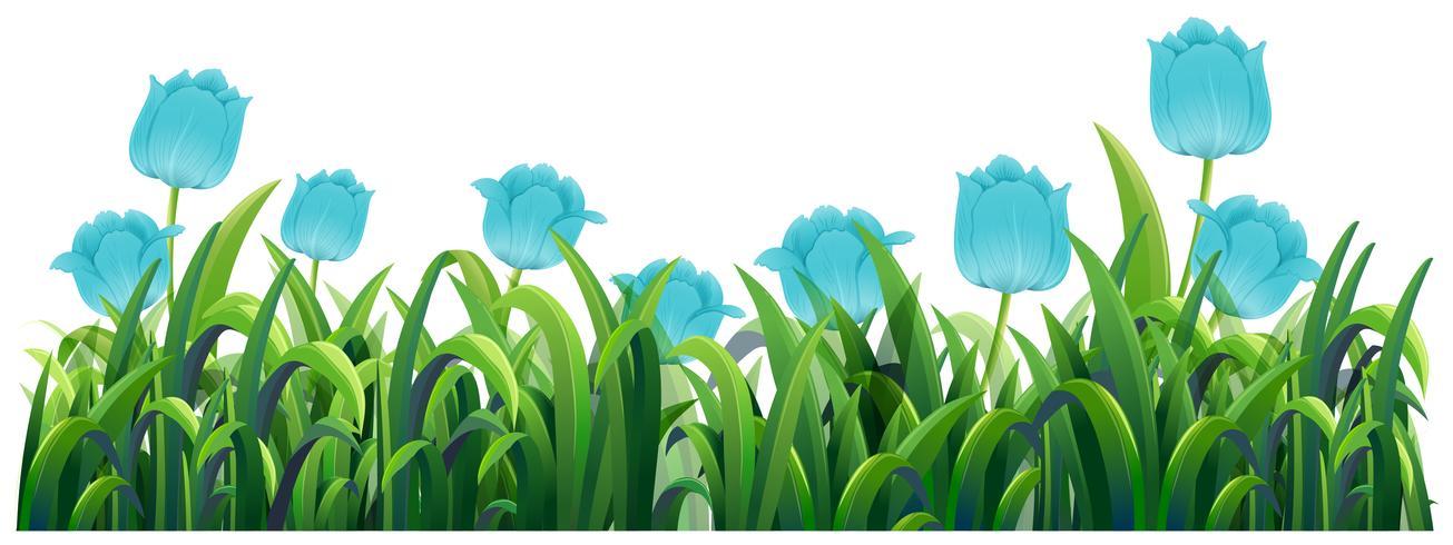 Flores de tulipa azul no mato verde vetor