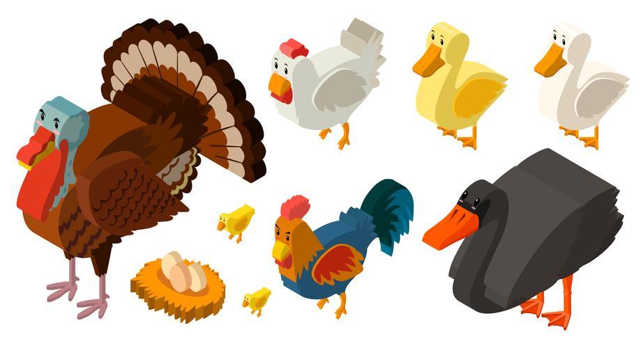 Design 3D para diferentes tipos de aves de fazenda vetor