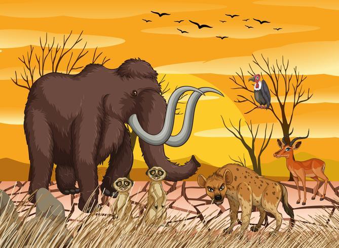 Animais selvagens na floresta seca vetor