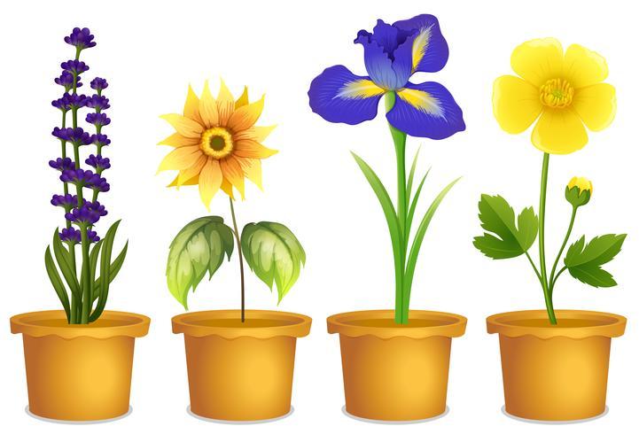 Diferentes tipos de flores em vasos vetor