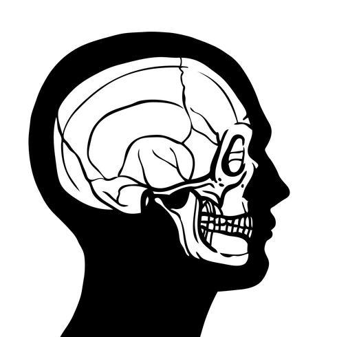 Cabeça humana, com, cranio vetor
