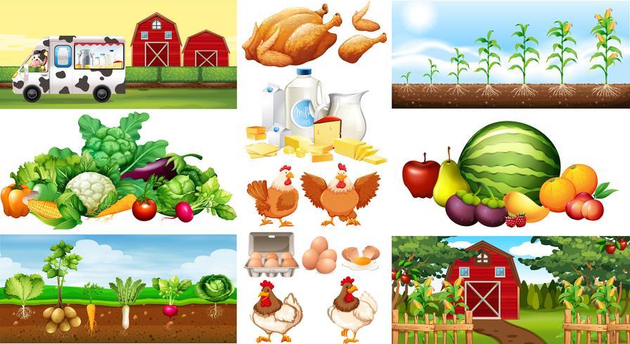Cenas da fazenda com legumes e frangos vetor