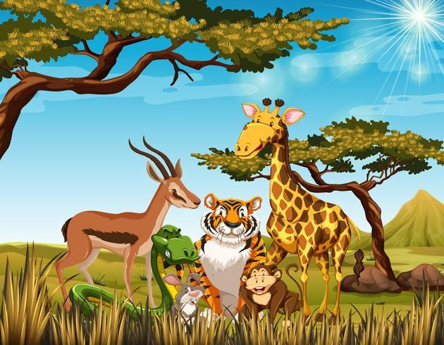 Animais selvagens no campo de savana vetor