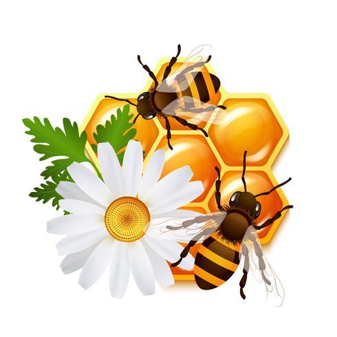 Emblema de flores de abelha do favo de mel vetor