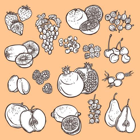 Ícones de esboço de frutas e bagas vetor