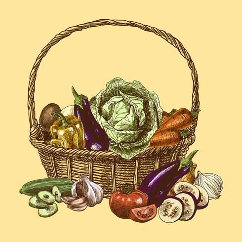 Cor de esboço de legumes vetor