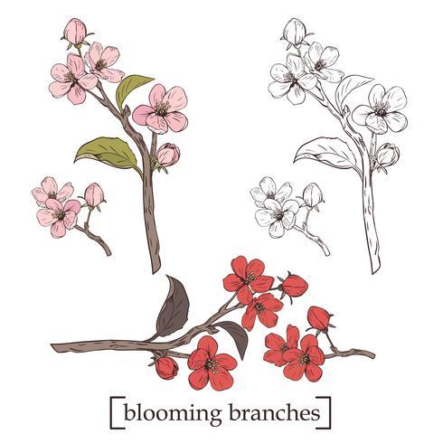 Árvore de florescência. Definir coleção. Ramos botânicos tirados mão da flor no fundo branco. Ilustração vetorial vetor