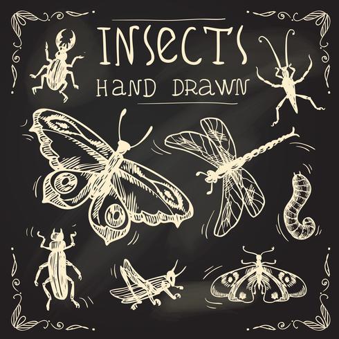 Conjunto de esboços de insetos vetor