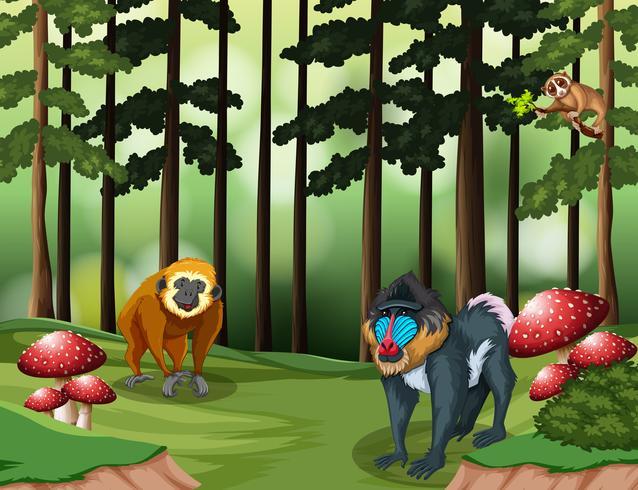 Macaco na floresta vetor