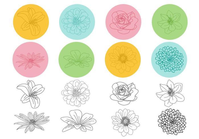 Pacote De Vetor Floral Delineado