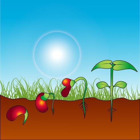 planta crescente vetor
