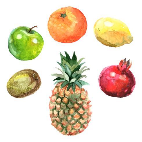 Conjunto de frutas em aquarela vetor