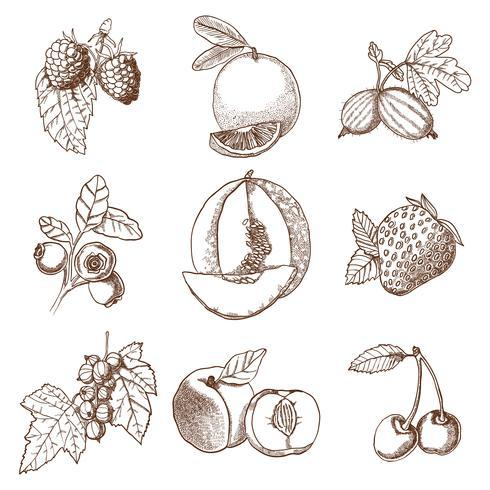 Conjunto de bagas e frutas de mão desenhada vetor