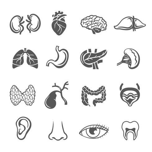 Conjunto de órgãos humanos vetor
