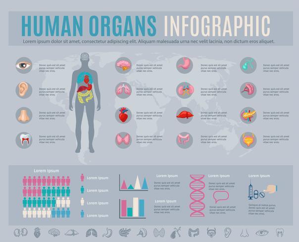 Conjunto de infográfico de órgãos humanos vetor