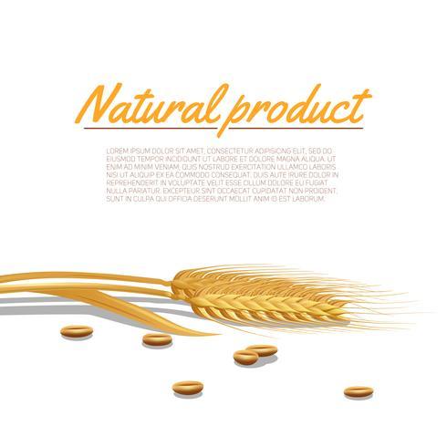 Ilustração de orelha de trigo vetor