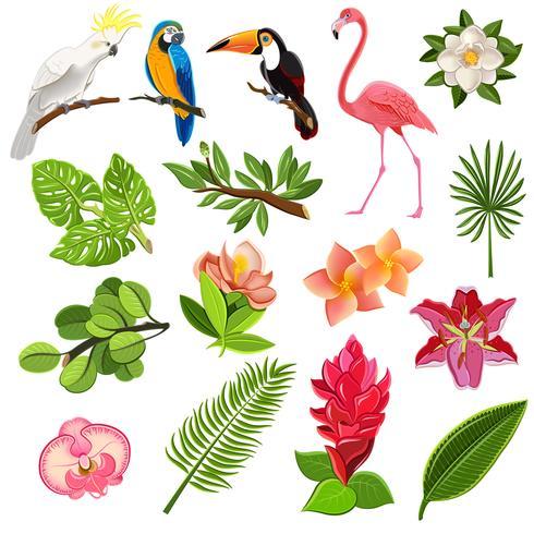 Conjunto de pictogramas de aves e plantas tropicais vetor