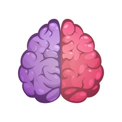 Imagem simbólica do cérebro direito e esquerdo vetor