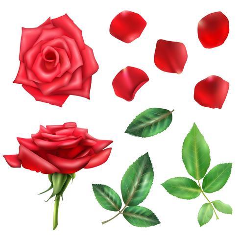 Conjunto De Flores De Rosas E Pétalas vetor