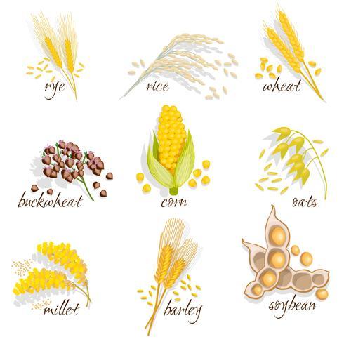 Conjunto de ícones de cereais vetor
