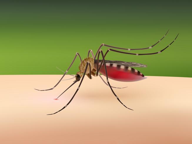 Mosquito chupando sangue vetor