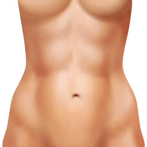 Corpo feminino realista com abs Atlético vetor