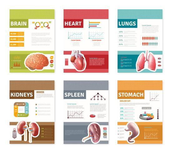Banners de Órgãos Humanos Internos vetor