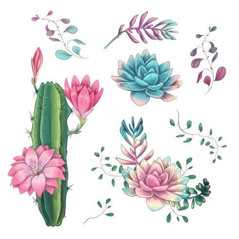 Suculentos. Mão dos cactos desenhada em um fundo branco. Flores no deserto. Suculentas de desenho vetorial vetor