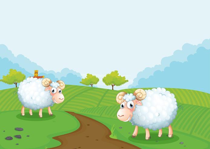 Duas ovelhas na fazenda vetor