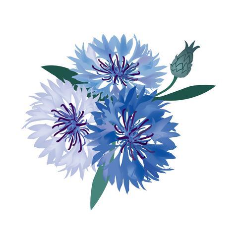 Buquê de flores. Quadro floral. Cartão de florescer. Decoração de verão vetor