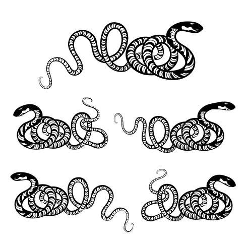 Conjunto de cobra. Silhueta de réptil de animais selvagens gravada. Cauda de animais estampados vetor