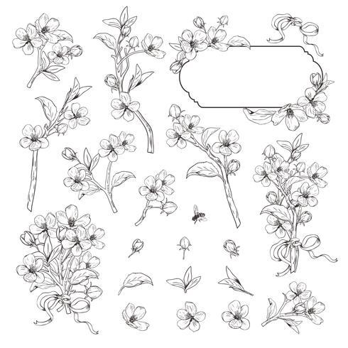 Árvore de florescência. Mega coleção definida. Ramos botânicos tirados mão da flor no fundo branco. Ilustração vetorial vetor