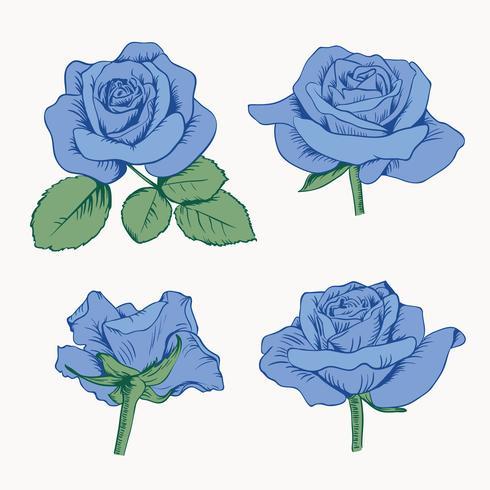Ajuste a coleção de rosas azuis com as folhas isoladas no fundo branco. Ilustração vetorial vetor