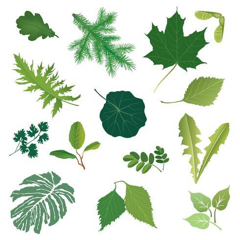 Conjunto de ícones de folha de natureza. Sinal floral de erva. Verão deixa coleção temporada vetor