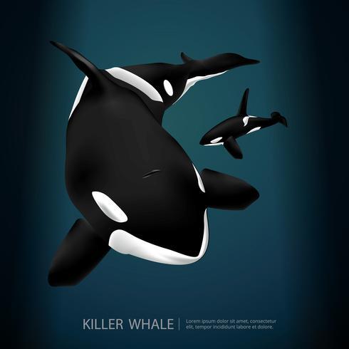 Baleia assassina sob a ilustração vetorial de mar vetor