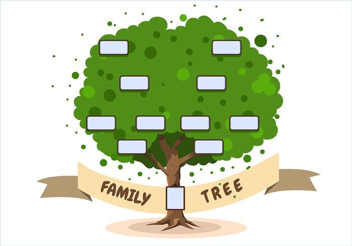 Modelo de árvore genealógica em fundo branco vetor