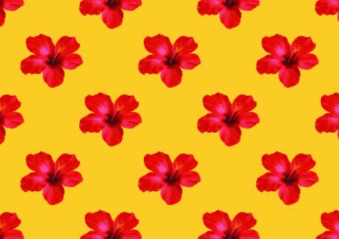 Ilustração tropical do vetor do fundo da flor do hibiscus.