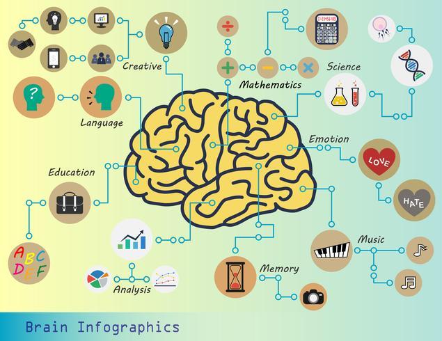 Infografia cerebral vetor