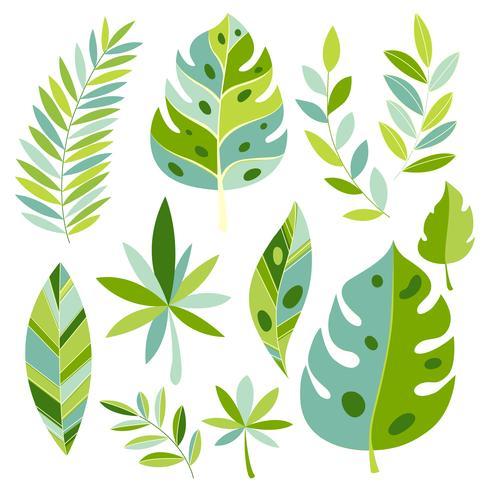 Plantas e folhas tropicais do vetor. Folhas exóticas botânicas. vetor