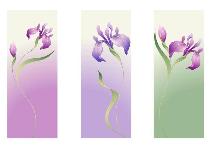 Íris flor vector banner pack