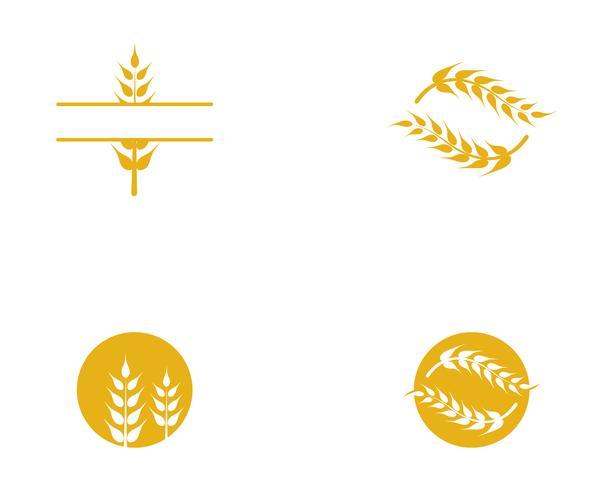 Vetor de trigo de agricultura