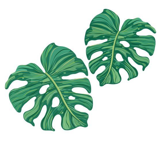 vetor de folhas verdes tropicais de verão