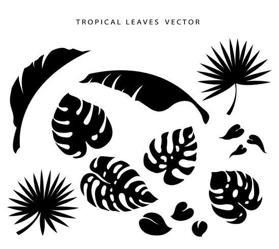 conjunto de ilustração vetorial de folhas tropicais vetor
