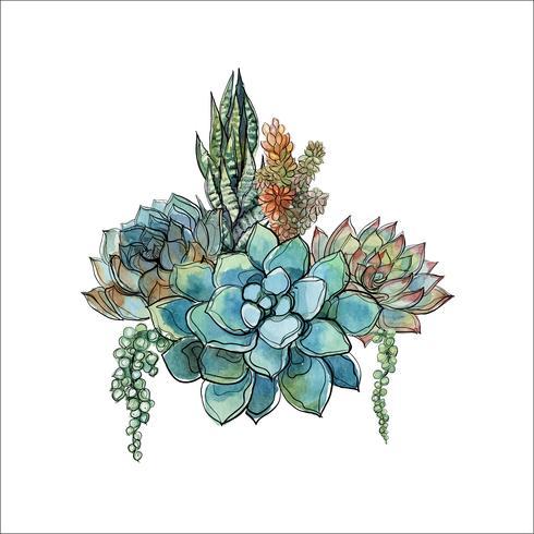 Buquê de suculentas. Arranjo de flores para o projeto. Aquarela Gráficos. Vetor. vetor