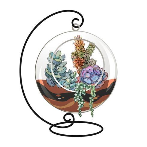 Suculentas em um aquário decorativo para flores. Gráficos e manchas de aquarela. Vetor. vetor