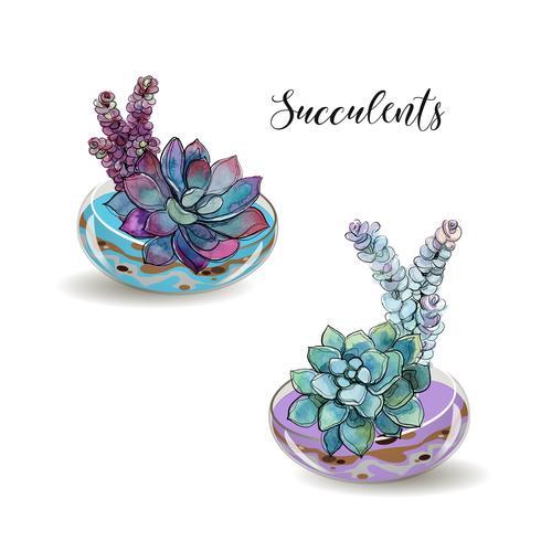 Suculentas em aquários de vidro. Areia colorida. Composições decorativas de flores. Gráficos. Aquarela Vetor. vetor