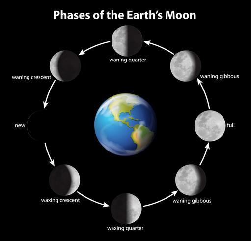 Fases da lua vetor